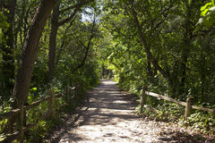 Forest walking/jogging path Royalty Free Stock Photography