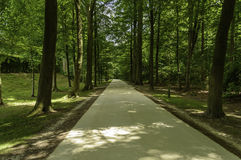 Forest Walking Path in Belgium Royalty Free Stock Images