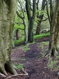 Forest walking path through green woodland trees Stock Photos