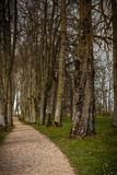 Forest walking path. With no people leading further into the woods. Shot in Latvia Royalty Free Stock Photo
