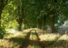 Forest walking paths. Two paths in the forest that leads to royalty free stock photo