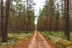 Forest walking road in Viru raba in the Lahemaa National Park in Estonia. stock images