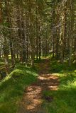 Forest walking route Stock Image