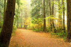 Forest Walkway Immagine Stock