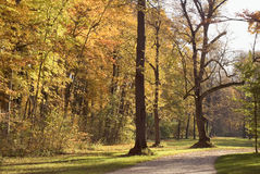 Forest Walkway with Autumn Colors Royalty Free Stock Image