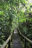 Forest Walkway Stock Photography
