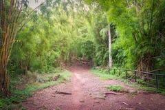 Forest Walkway de bambú Imagen de archivo