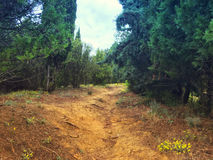 Forest walkway on the mountain above sea Royalty Free Stock Image