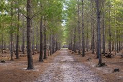 Forest Walkway Path stock image
