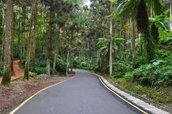 Forest walkway at Sitou, Taiwan Royalty Free Stock Image