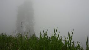 The forest was covered with fog. Green tops of coniferous trees, grass and bushes. stock video