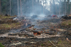 Forest was cut down and burned Royalty Free Stock Photo