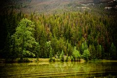 Forest by the water. Mountain and trees on a waters edge Royalty Free Stock Photo