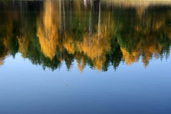 Forest in water. Flashing of autumnal forest in surface of water Royalty Free Stock Image