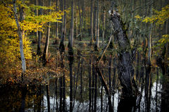 Forest. Water in forest caused of many rains before a few days Royalty Free Stock Image