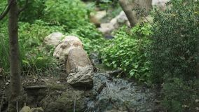 Forest water creek running along stones, green grass and trees stock video