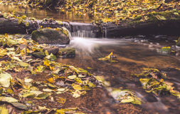 Forest water flowing Stock Image