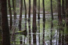 Forest in the water and its reflection Stock Photos