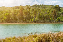 Forest and water lake with sunlight at winter or spring day. Royalty Free Stock Photo