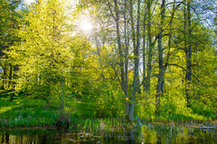 Forest water landscape Stock Image