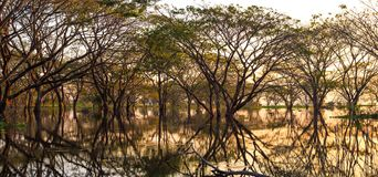 Forest and water reflection with golden hours. royalty free stock photography