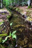 Forest water Royalty Free Stock Image