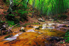 Forest with water stream and rapids Royalty Free Stock Photo