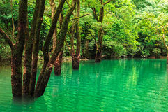 Forest in water. Trees growing in water , GuiZhou ,China Stock Image