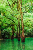 Forest in water Stock Image