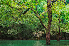 Forest in water. Trees growing in water , GuiZhou ,China Royalty Free Stock Images