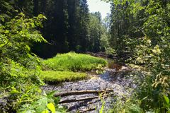 Forest wateralls in Karelia, reserve White Bridges Royalty Free Stock Photo