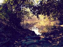 Forest. Waterbody, pond, evening, forest, calmness Royalty Free Stock Images