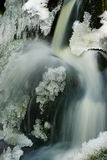 Forest waterfall. Seclusion with icicles and forest waterfall Stock Images