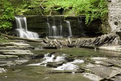 Free Forest Waterfall Royalty Free Stock Photo - 2594665