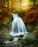 Forest waterfall. Autumn creek woods with yellow trees foliage and rocks in forest mountain