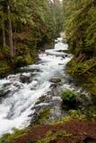 Forest Waterfall Foto de archivo libre de regalías