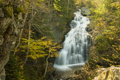 Forest Waterfall Royalty Free Stock Photos