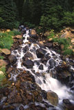 Forest waterfall Stock Images