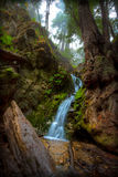 Forest Waterfall. Big Sur Redwood Forest Waterfall Stock Photos