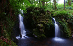 Forest waterfall Royalty Free Stock Images