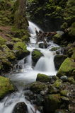 Forest waterfall. Waterfall flowing between green rocks in forest Royalty Free Stock Images