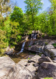 Forest with a waterfall Stock Images