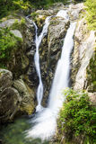 Forest waterfall with green vegetation,selective focus Royalty Free Stock Photos