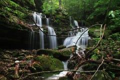 Forest Waterfall profondo precipitante a cascata Fotografia Stock Libera da Diritti