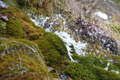 Forest waterfall and rocks covered with moss. Royalty Free Stock Image