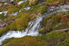 Forest waterfall and rocks covered with moss. Stock Image