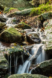 Forest waterfall. A small waterfall in the forest stock photography