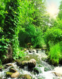 Forest waterfall with wet rocks. Panoramic landscape Royalty Free Stock Photo