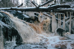 Forest waterfall in winter Royalty Free Stock Images
