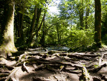 The forest at the waterfalls of Herison, France Royalty Free Stock Image